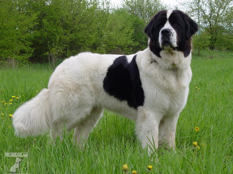 Une journee de pension pour un grand chien for Piscine pour grand chien